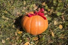 Large pumpkin with ribbon close up Stock Photos