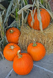 Large Pumpkin ubiquitously for sale before Halloween Royalty Free Stock Photo