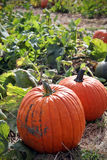 Large pumpkins Stock Photo