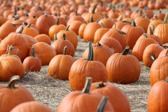 Large pumpkins Royalty Free Stock Photography