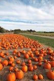 Large pumpkins Stock Image