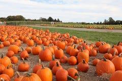Large pumpkins Royalty Free Stock Photo