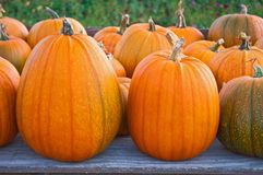 Large pumpkins Stock Photography