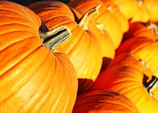 Large pumpkins in a row Stock Photography