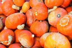 Large pumpkins. Stack of large orange, just harvested pumpkins Stock Photography