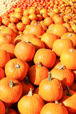 Large pumpkins in the sun in Europe Stock Image