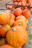 Large pumpkins in a tractor cart Stock Photos