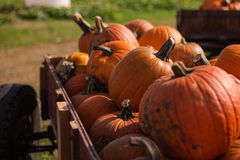 Large pumpkins in a wagon Stock Photography