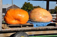 Large pumpkins. On a wooden cart Stock Images