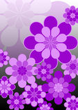 Large purple flowers Royalty Free Stock Photo