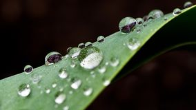 Large rain drops on the green leaf, close up photo, partially blurred, isolated on dark background. Beautiful nature wallpaper Stock Photo