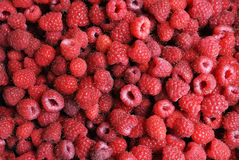 Large raspberry harvest Stock Photo