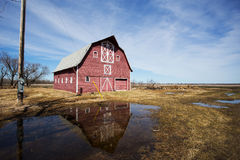 Large red barn reflected in puddle of water Stock Images