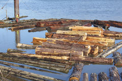 Raw Cedar Logs in River Royalty Free Stock Images