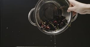 A female hand turns over the colander with a ripe wet cherry, which falls out of it and splashes of water scatter in. A large red cherry falls out of the stock video