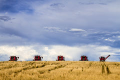 Large Red Combines Agriculture Equipment. Row of red modern combines harvesting field of wheat with dramatic summer sky Royalty Free Stock Photography