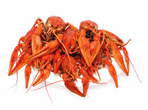 Large red crabs Royalty Free Stock Photography