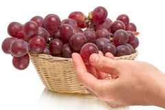 Large red grapes and hand Stock Image