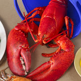 Large Red Lobster Royalty Free Stock Photos