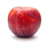 Large red plum Stock Image