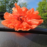 Large red poppy on the roof Stock Image
