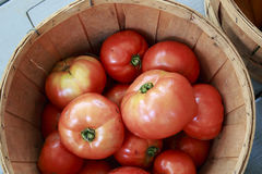 Large Red Ripe Tomatoes in a Basket Royalty Free Stock Photography