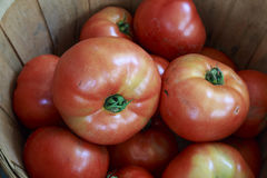 Large Red Ripe Tomatoes in a Basket Stock Image
