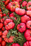 Large red tomatoes Stock Photos