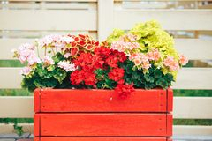 Large Red wooden pot with flower. Street wood pot with flowers in outdoor royalty free stock photography