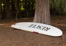 Large rescue surf board in woods Stock Photography