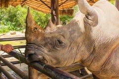 Large Rhino Stock Photos