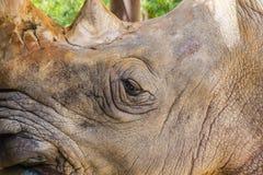 Large Rhino Royalty Free Stock Images