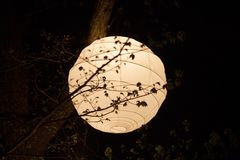 Rice Paper Lantern. Large rice paper lantern outdoors with tree branches silhouetted against the light Stock Image