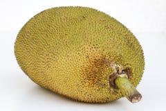 Large ripe jackfruit. India Goa. Stock Images