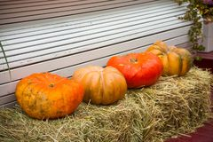 Large ripe pumpkins on the hay Royalty Free Stock Photography