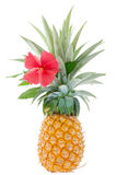 Large ripe pineapple, just cut from the garden with red hibiscus Royalty Free Stock Images