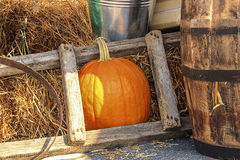 Large ripe pumpkin Royalty Free Stock Images