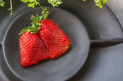 Large ripe strawberries original unusual shape lies on a beautiful black matte plate on a gray background. Copy space.  royalty free stock images