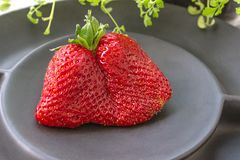 Large ripe strawberries original unusual shape lies on a beautiful black matte plate on a gray background. Copy space.  stock photos
