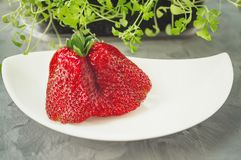Large ripe strawberries original unusual shape lies on a beautiful white plate on a gray background. Copy space.  stock photo