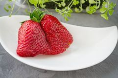Large ripe strawberries original unusual shape lies on a beautiful white plate on a gray background. Copy space.  royalty free stock images