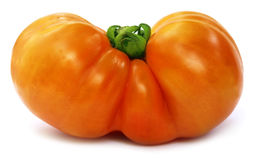 Large ripe tomato Royalty Free Stock Image
