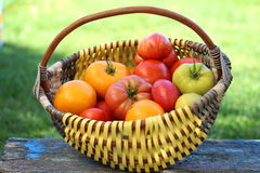 Large ripe tomatoes. Of different varieties are in a wicker basket Royalty Free Stock Photography