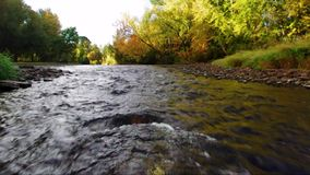 Large river rapids in autumn in Idaho stock video