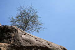 Large Roack Lone Tree Blue Sky. A Lone Tree with thorny leaves raise from the barren rocks below. Seen against a large backdrop of clear blue noon sky Stock Photo