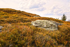 Large Rock in the Middle of a Juniper Field Royalty Free Stock Image