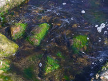Large rocks and green seaweed in the sea. The large rocks and green seaweed in the sea Royalty Free Stock Photography