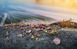 Large rocks on the river bank with autumn colorful fallen leaves. Royalty Free Stock Photography