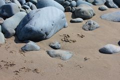 Large rocks on a sandy beach texture background Royalty Free Stock Photography