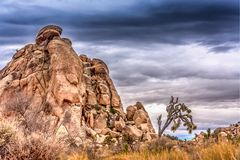 Large Rocks and Single Joshua Tree. Large rocks as a major storm approaches in the background in the desert royalty free stock photography